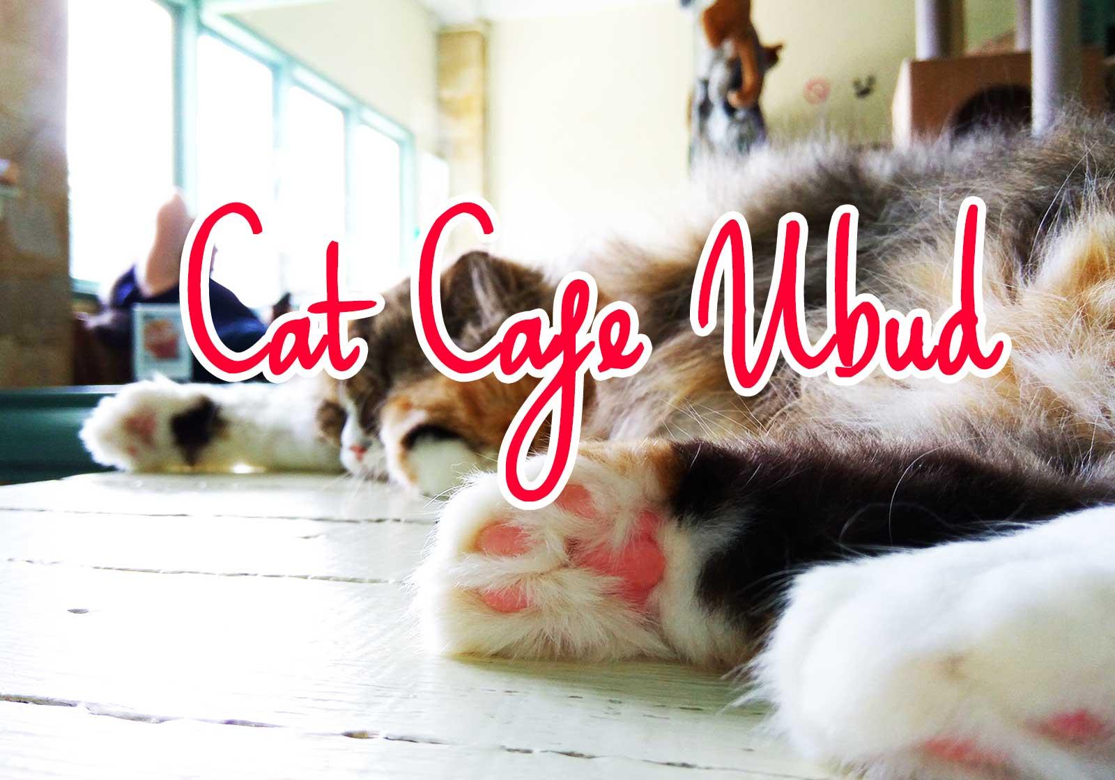 バリ島ウブドの猫カフェ
