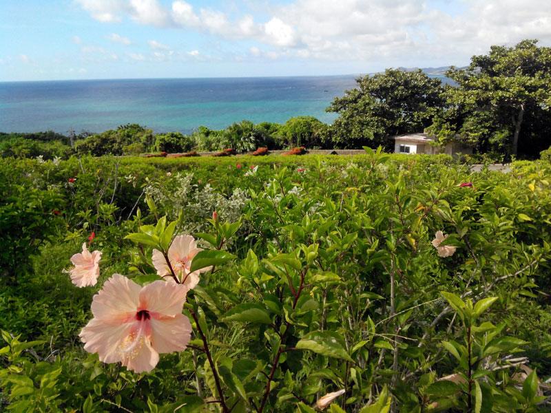 【石垣島 観光】小高い丘から海を眺める 玉取崎展望台