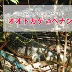大トカゲを間近で見れるペナン国立公園の楽しみ方(´Д` ) 女性ひとり旅で行ってきたよ