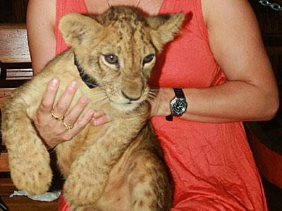 バリズーに子ライオン!