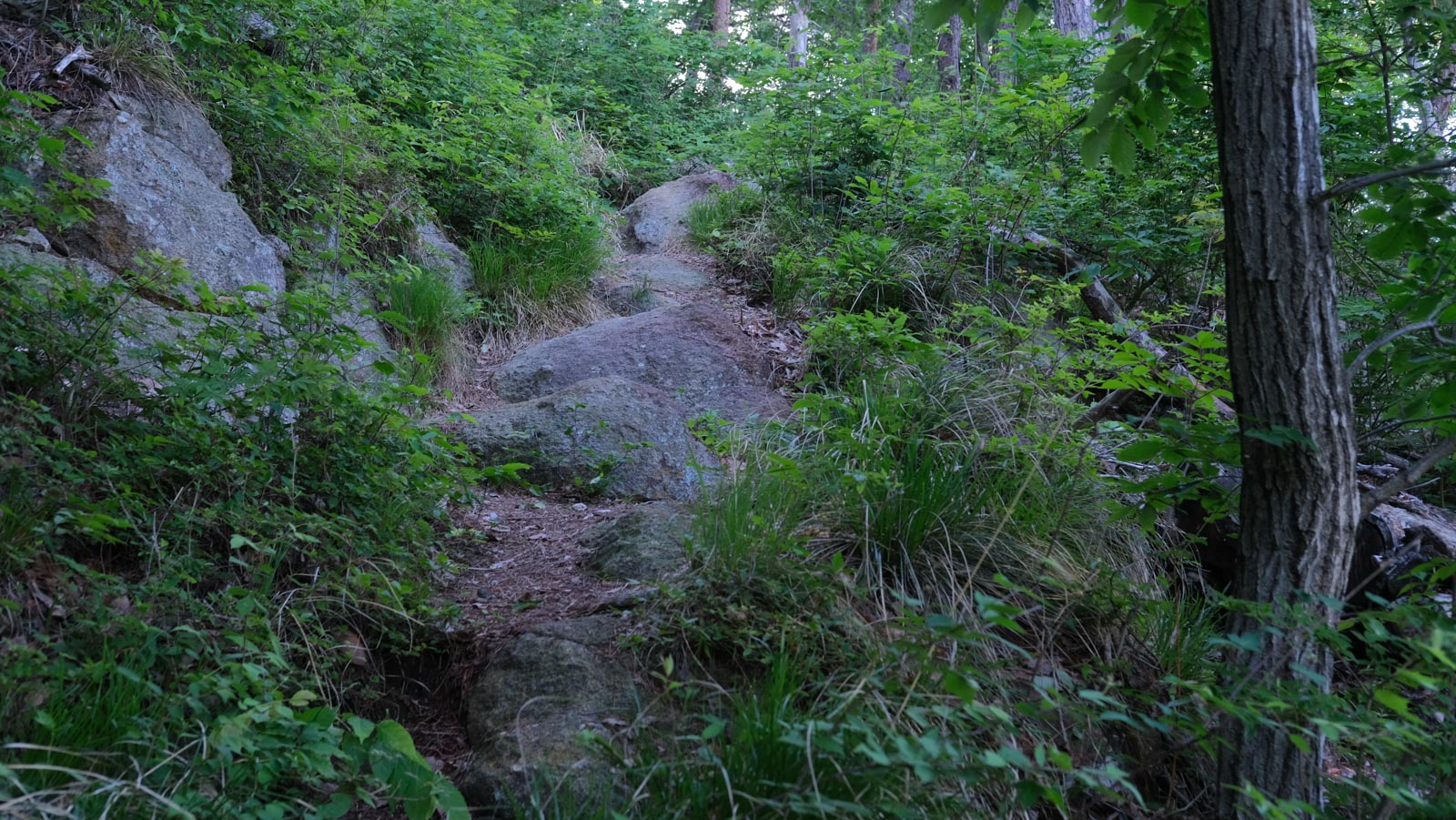 岩場の坂道
