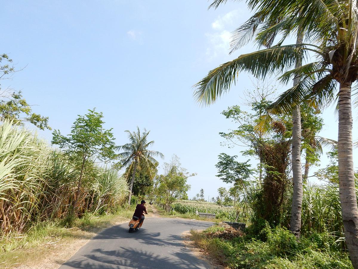 ヤシの木が並ぶでこぼこ道を20分走る