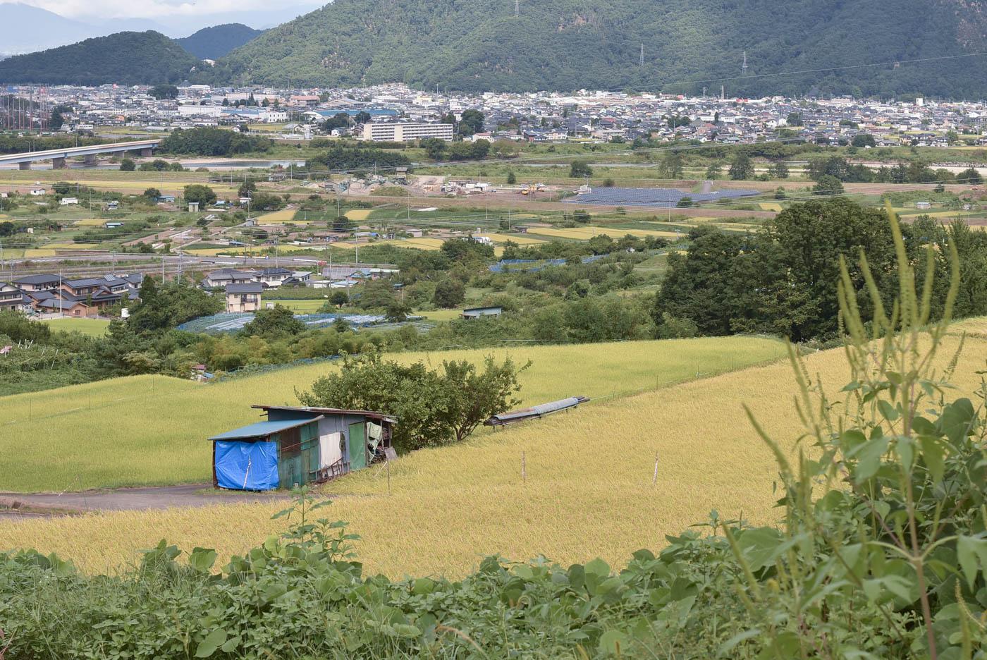 長野らしい田んぼと山の景色