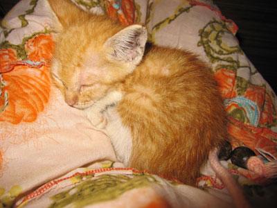 バリ島猫4