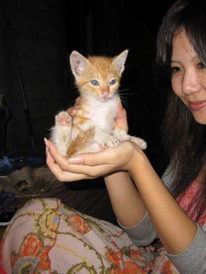 バリ島猫1