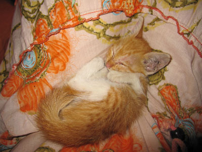 バリ島猫3
