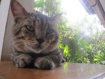 バリ島猫2