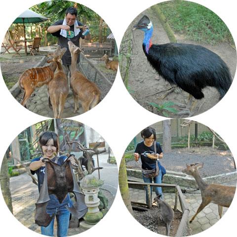 バリズーの動物たち2