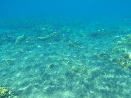 アメッド水中1