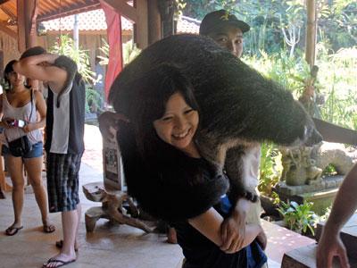 動物園クマ