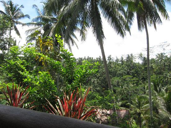 バリ島カンプンカフェ (4)