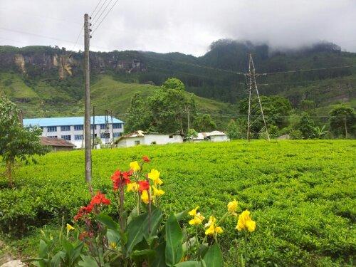 【スリランカ】ヌワラエリヤの紅茶工場Bluefield Tea Gardens